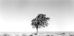 2006078 Lone Tree, Kiowa NGL, NM 2006