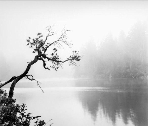 2007107 TreeFog, Lake Marie, OR 2007