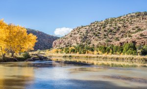 20152010DC Chama River Cottonwoods No.5, NM 2015