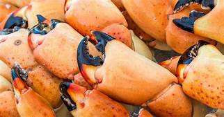 In The Mood For Delicious Stone Crab Claws? Then You Are In Luck! Stone Crab Season Is Almost Here – Azureazure