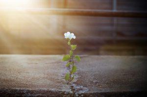Flowers growing through concrete/ poem donna ashworth