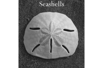 B&W Seashell Photography Art Gallery & Custom Ocean Gifts