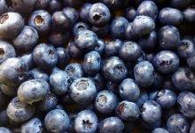 Top Foods to Choose Organic