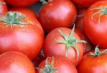 Tomato Sauce with Veggies