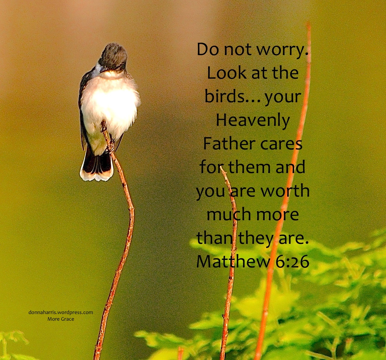 Worry Dethrones God Sunday Respite