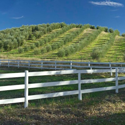 Pasolivo Olive Vineyard