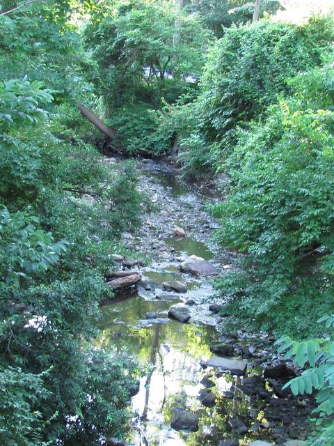 Tacony Creek tributary