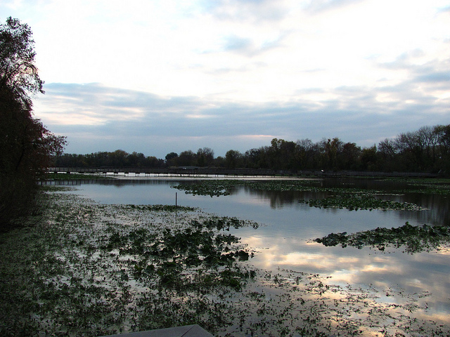 Impoundment pond at John Heinz NWR at Tinicum in South Philadelphia, PA.