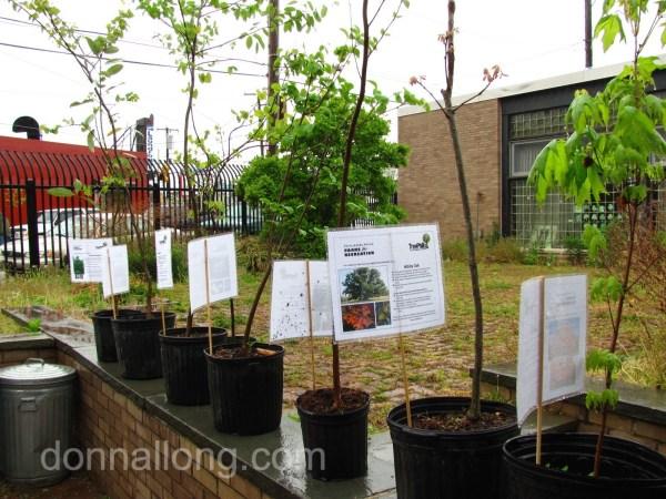 trees at TreePhilly