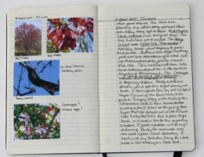 The Nature Journal – What is It? How Do I Start?