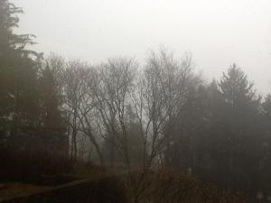 a foggy woodland