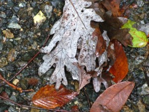 fall leaves. Photo by Donna L. Long