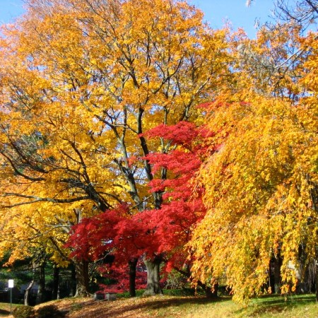 vibrant autumn colors of local trees