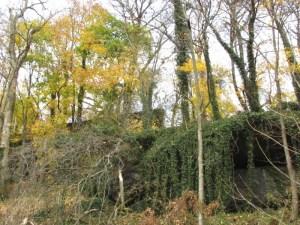 Invasive vines grow throughout the Wissahickon Valley Park.