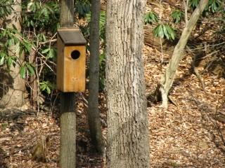 Nest in the Wissahickon Forest in Philadelphia