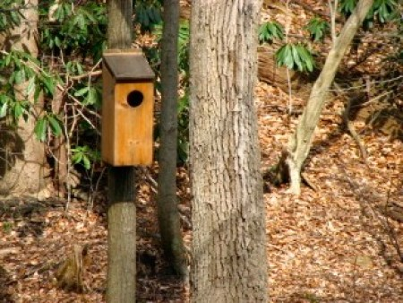 Nest box in the Wissahickon Forest in Philadelphia