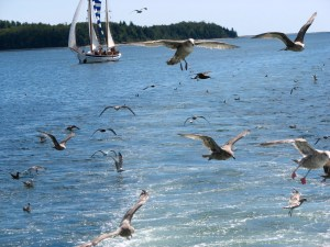 Seagulls following a cruise ship in the Atlantic Ocean.