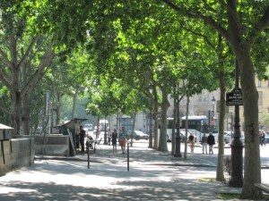 Street trees long the Quai De Conti in Paris. Photo by Donna L. Long.