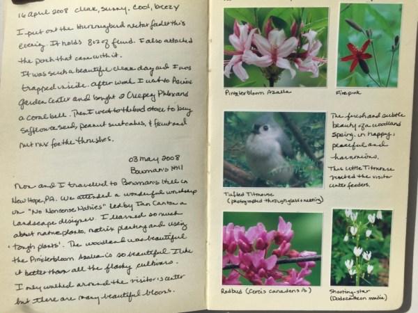 My nature journal 16 April 2008