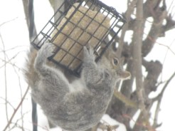 A squirrel-eat-and-dash