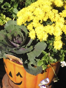 Cabbage grown in a whimsical pumpkin pot