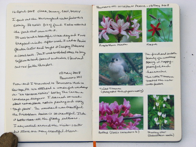 a page from my nature journal of 08 May 2008