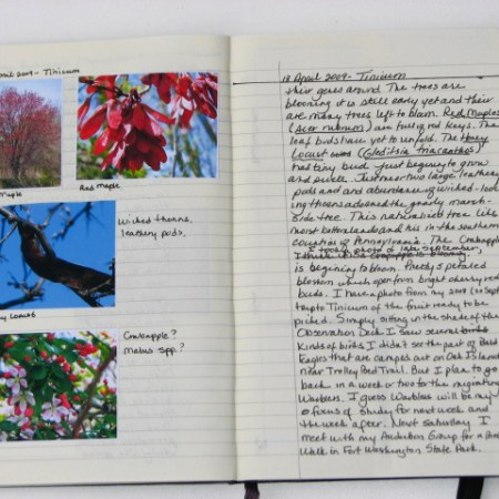 a page from my nature journal