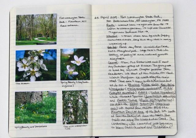 my nature journal 25 April 2009