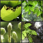 Green nature photo collage