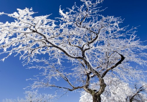 ice covered tree branches