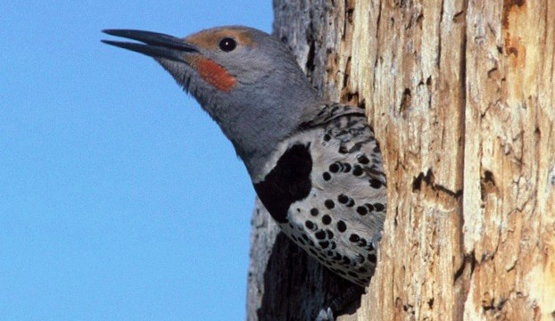 Cavity Nesters: Birds that Use Holes in Trees