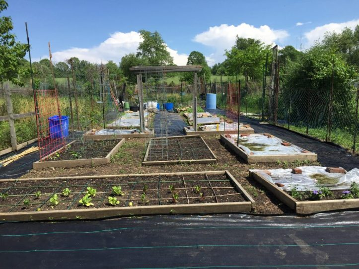 The second community garden plot, after remove of a small amount of weeds and junk, April 2018.