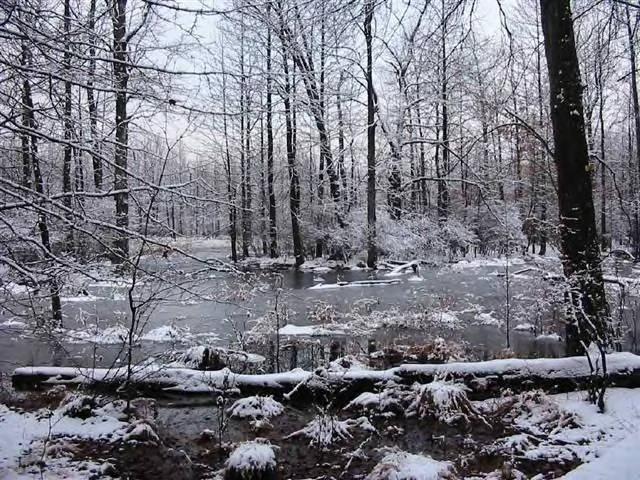 Winter in the Great Dismal Swamp NWR in Virigina.USFWS/public domain.