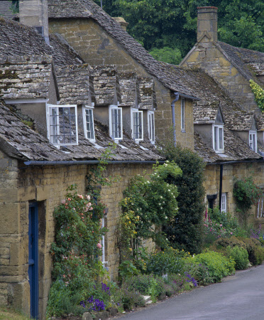Row of cottages in the village with roses tumbling over the windows and doorways at Snowshill, Gloucestershire