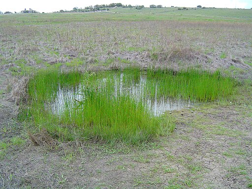 A vernal pool in Santa Rosa Plateau, California. Geographer at English Wikipedia