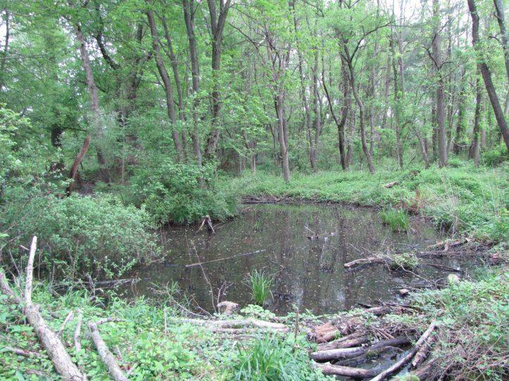 The enhanced pool - Tacony/Tookany-Frankord Creek Partnership,