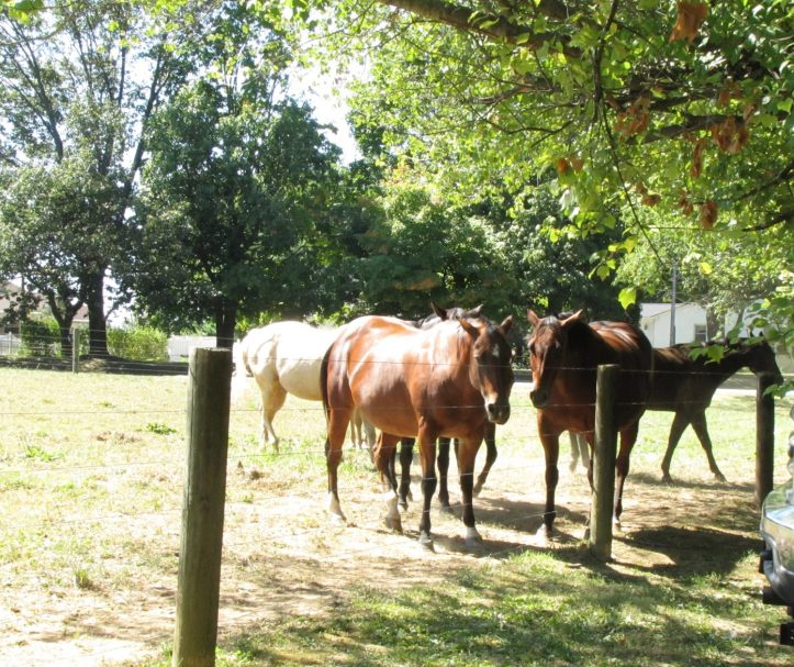Horses in Fairmount Park, Philadelphia, PA. Photo by Donna L. Long.
