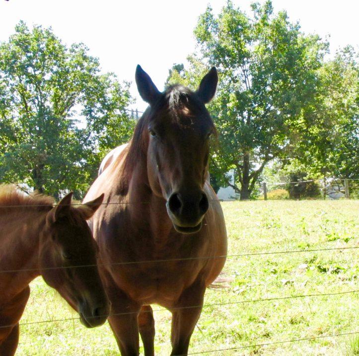 Horses in Fairmount Park, Philadelphia, PA. Photo by Donna L. Long.