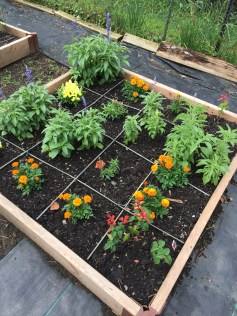 Marigolds and salvias in a Square Foot Garden layout.