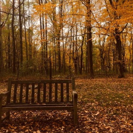 a bench in forest in autumn