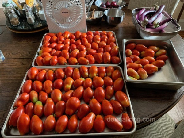 roma tomatoe harvest