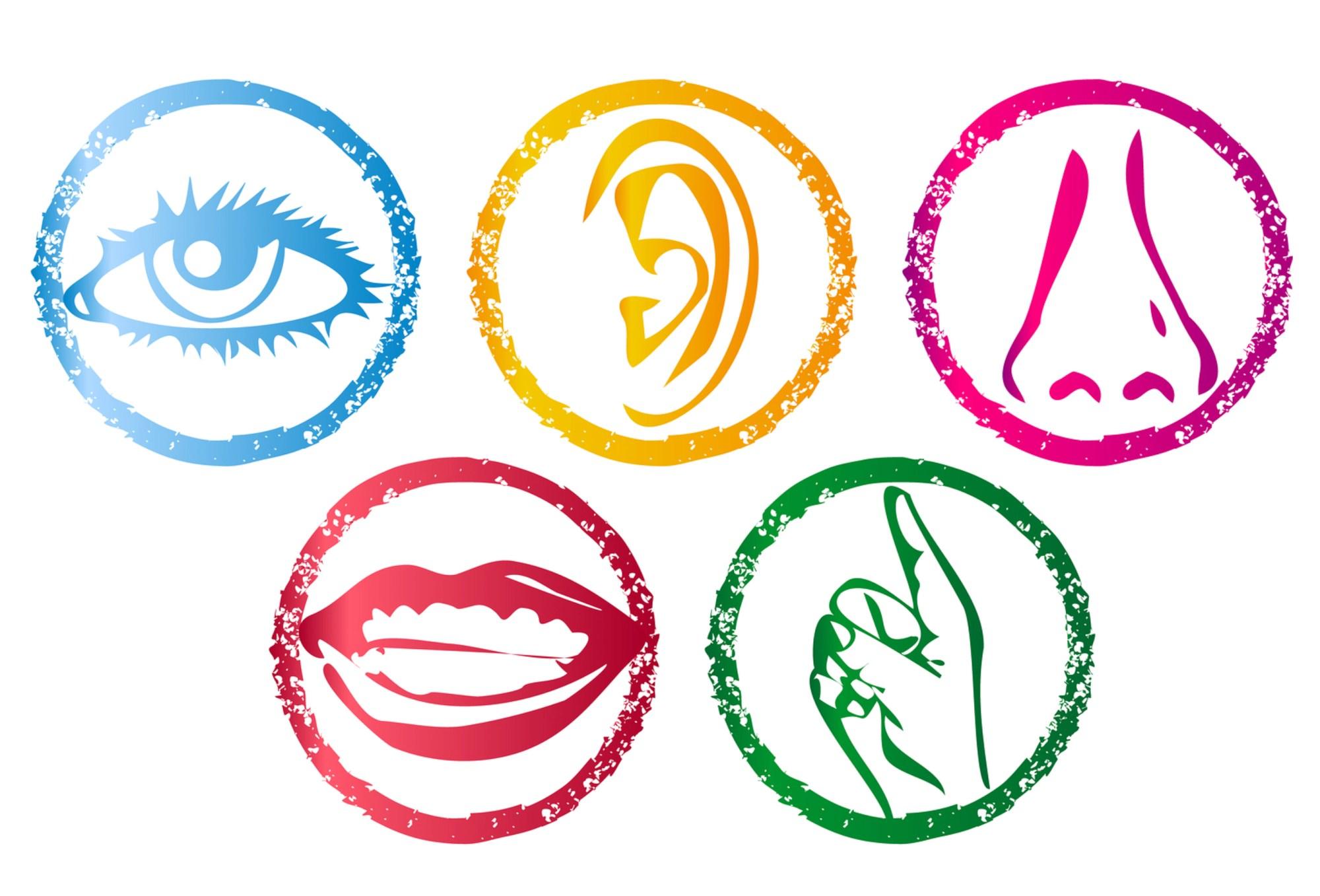 drawing of five senses