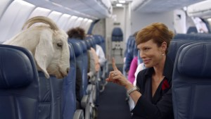 woman talking to a goat on an airplane