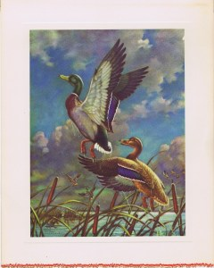 Ducks Leaving Pond - Emmett Watson print