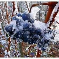 Cosa sono i vini del ghiaccio