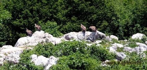 Avvoltoi_1.jpg