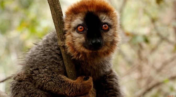 Diario di viaggio: Madagascar – giorno 5