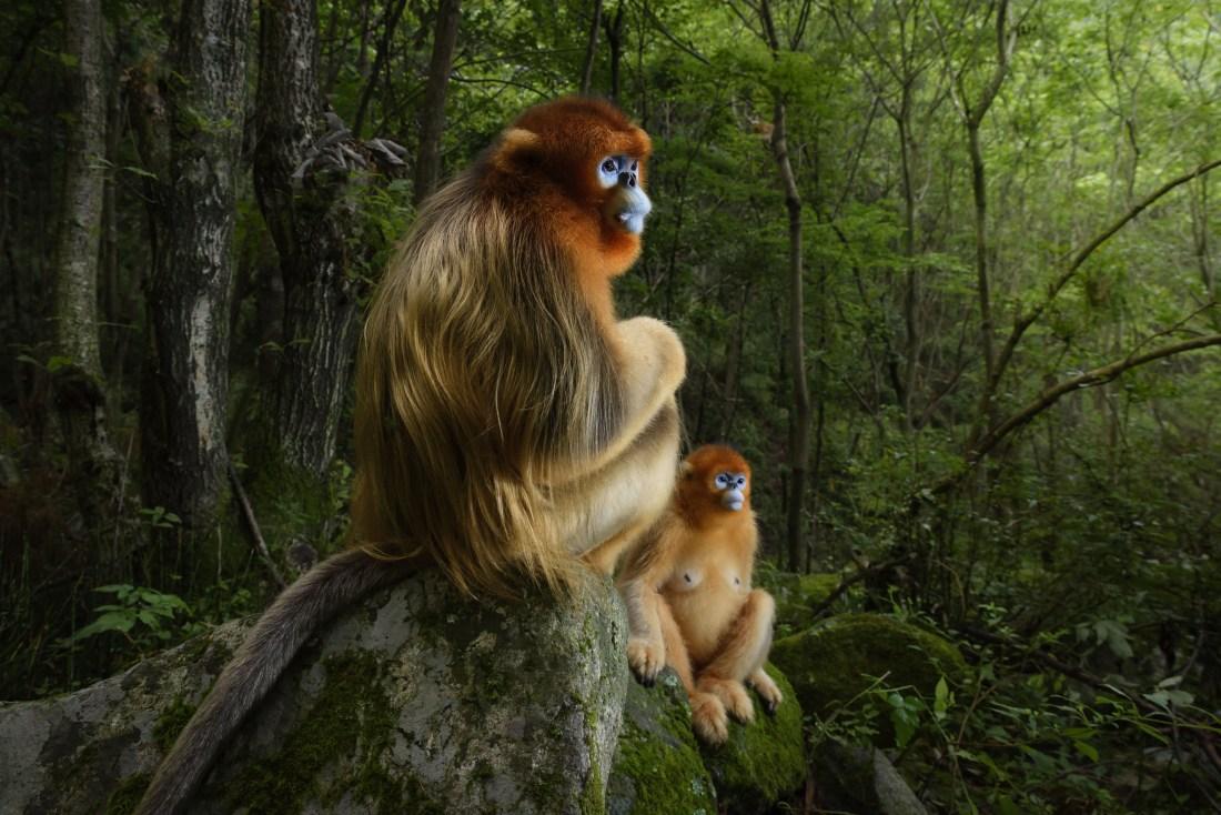 19_The Golden Couple © Marsel van Oosten - Wildlife Photographer of the Year