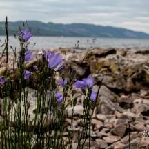 Loch_Ness_3