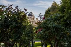 Vienna_Volksgarten_1